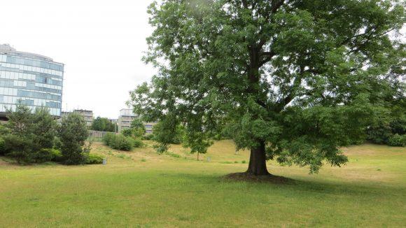 Der Friedenthalpark an der A100. (c) Trieba