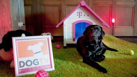 Hunde im Fernsehen? Na klar! Fernsehen für Hunde? Ein umstrittenes Angebot.