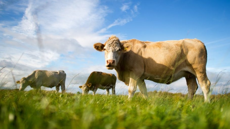 Dieses Jahr kannst du in Brandenburg nicht nur viele glückliche Kühe kennenlernen.