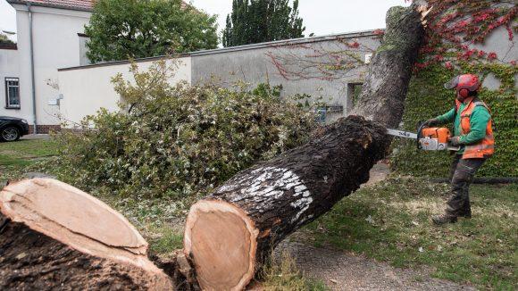Ein riesiger Baum fiel auf ein Familienhaus in Berlin-Tempelhof. ©dpa/Bernd von Jutrczenka