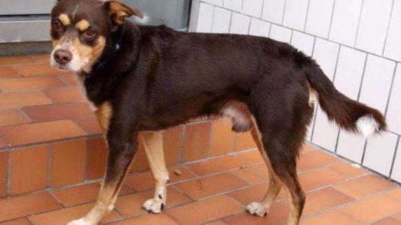 Jonny aus dem Tierheim Berlin.