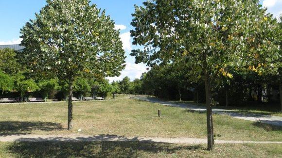 Einsamer Sommernachmittag im Carl-Weder-Park.