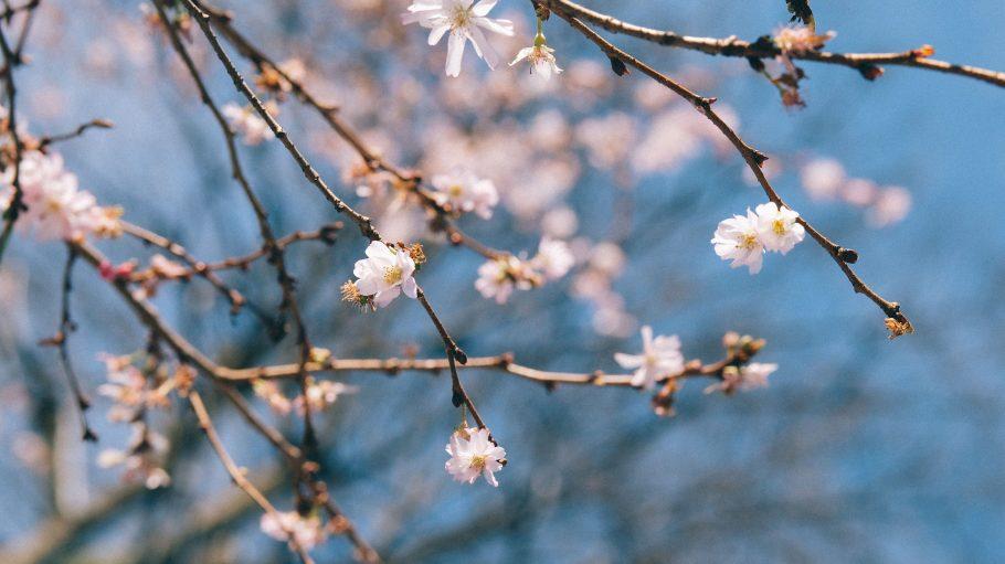 Der Frühling schickt die ersten Boten!