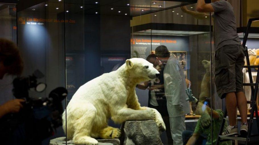 Da isser wieder! Knut, ausgestopft, im Naturkundemuseum.