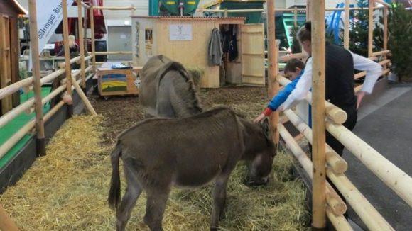 Tiere streicheln und mehr auf der Grünen Woche in Berlin.