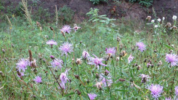 ... etwa über die vielen verschiedenen Pflanzen, die hier wachsen.