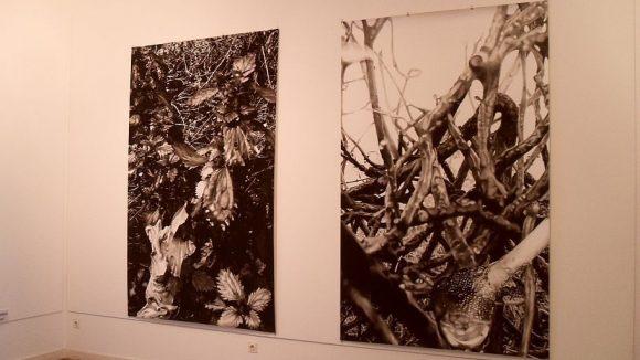 Kohlezeichnungen des Berliner Künstlers Peter Hock.