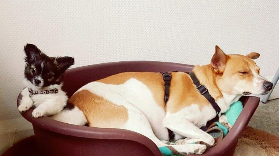 """Bei """"Lotte & Nino"""" fühlen sich kleine und große Hunde tierisch wohl."""