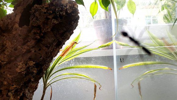 Im Antstore bekommst du Riesen-Ameisen vor die Linse. ©Eve-Catherine Trieba