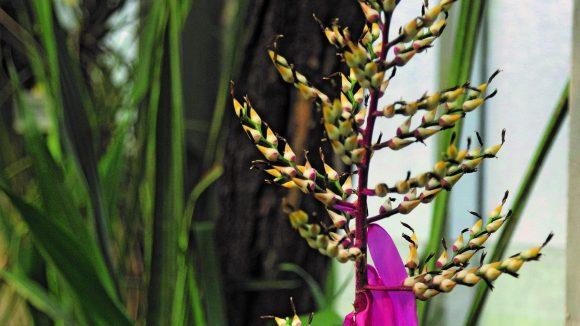 Je nach Witterung blühen, duften und fruchten die Pflanzen früher oder später im Jahr.
