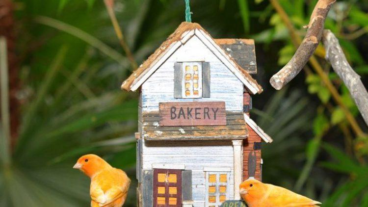 Nicht nur putzige Kanarienvögel können Besucher am Wochenende im Botanischen Garten live erleben.