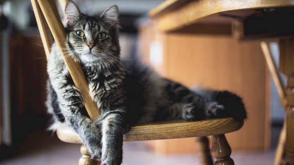 Mieeeez, miezmiezmiez! Du liebst Katzen? Dann ab ins Katzencafé.