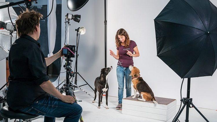 Camea Brandt von der Hundekita Jack Perro erklärt den Vierbeinern, wie man posiert.