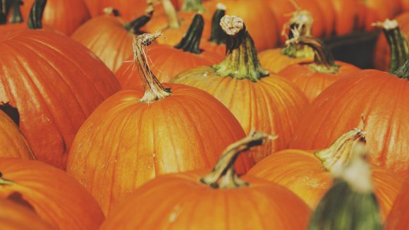 Auf unseren Herbstevents kannst du Kürbisse schnitzen, essen, schlachten und mehr.