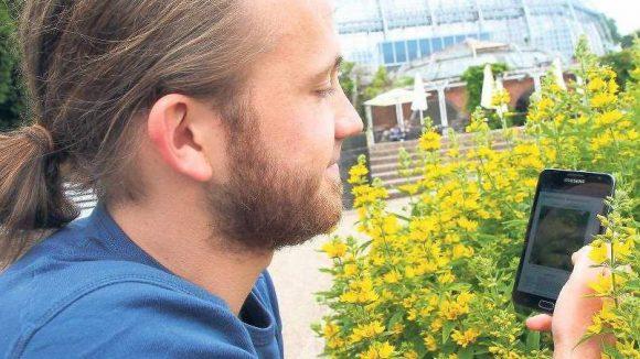 Augen auf! Biodiversitätsinformatiker Falko Glöckler bestimmt einen Gilbweiderich im Botanischen Garten mittels einer neuen Handy-App. Am Sonntag können es ihm interessierte Berliner gleichtun.