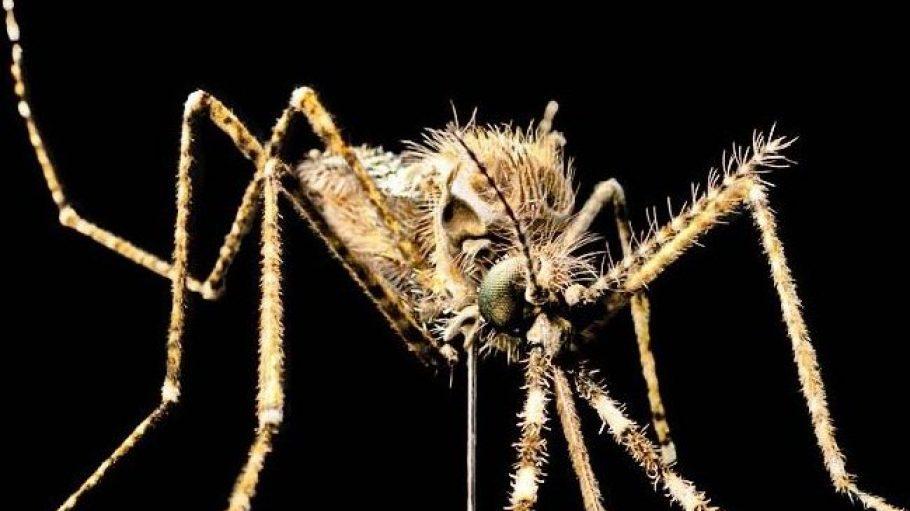 Wirklich süß, so eine kleine Malariamücke.