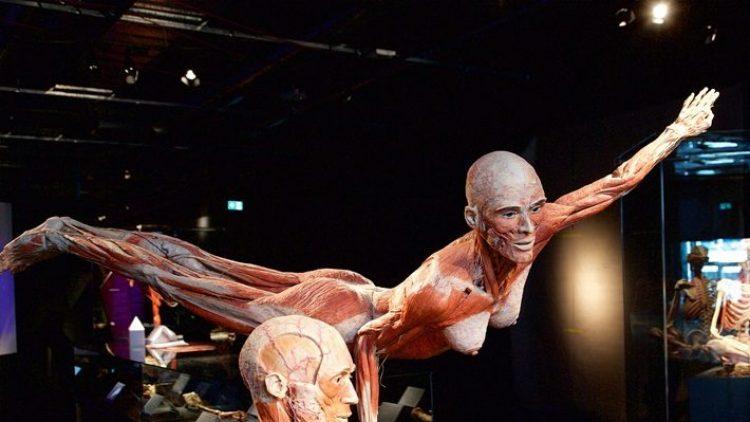 Diese beiden Plastinate empfangen den Besucher im neuen Menschen Museum.