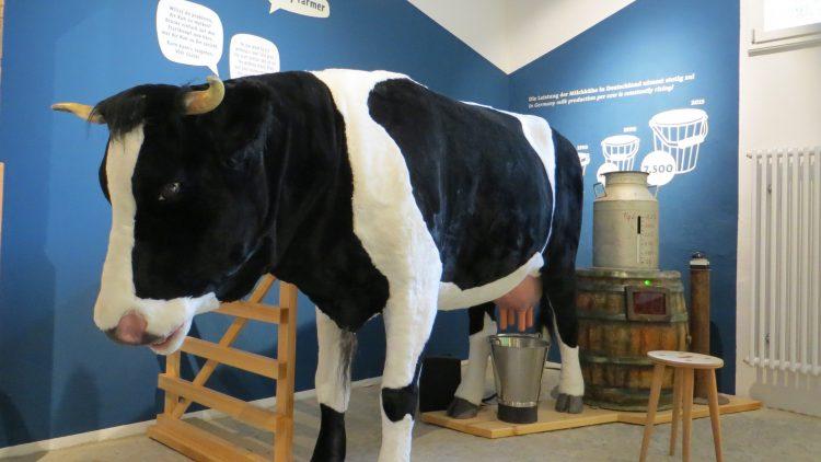 An dieser Mitmachstation im Culinarium hast du 30 Sekunden Zeit, um möglichst viel Milch aus dem Euter einer Kuh zu quetschen. Und lernst dabei ganz nebenbei, wie sich unsere Kühe in den vergangenen Jahrzehnten verändert haben ...