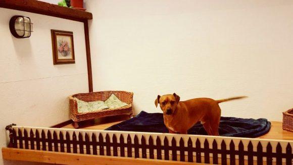 Nino im Zimmer für die kleinen Gäste. (c) Trieba