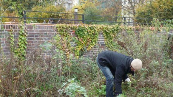 Das Rückschneiden der Rosen stand am 27.10.2012 ganz oben auf dem Programm des Aktionstages am Arnswalder Platz.