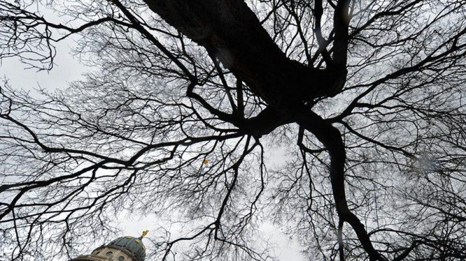 Was wäre Berlin ohne seine Bäume! Sorge dafür, dass es mehr werden.