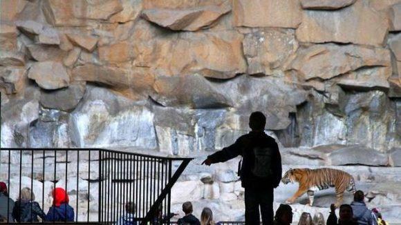 Die Tiger im Tierpark haben nur wenig Auslauf. Für Zoo- und Tierparkchef Andreas Knieriem ist dies nicht mehr zeitgemäß und für den Besucher abstoßend.