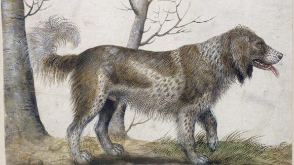 Verhagen der Stomme: Wasserhund, 16. Jhr. (c) SMB / Jörg P. Anders