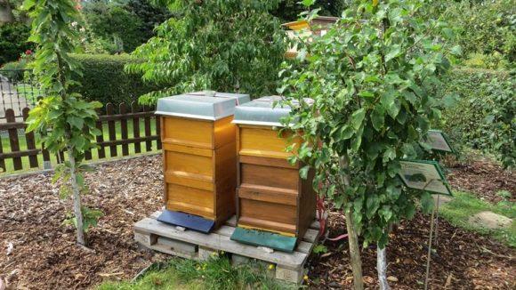 Vier Bienenstöcke gibt es in der Kolonie.