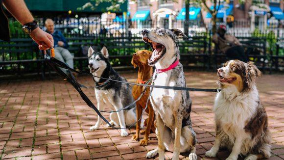 Ein Hundeleben in Berlin: Statt der üblichen Runde um den Block dürfen unsere treusten Begleiter bald auf einem Dach in Kreuzberg spazieren.