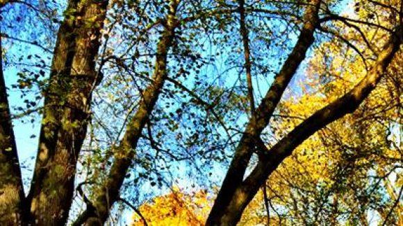 Wunderschön im Herbst. (c)Gerlinde Jänicke