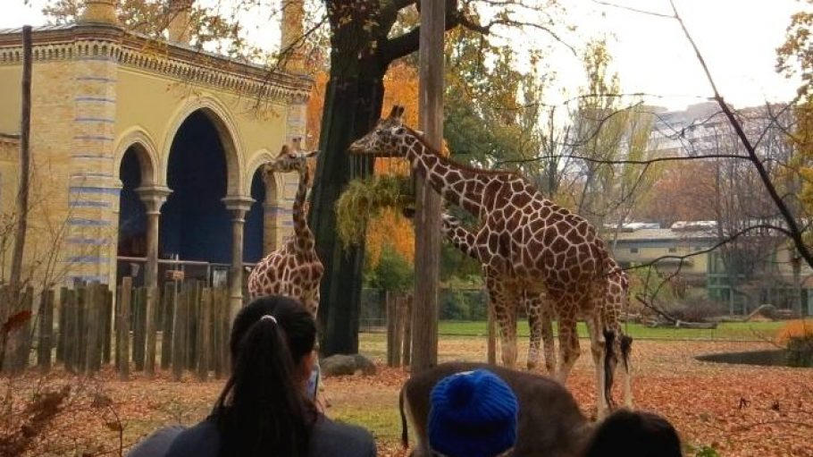 Mit zwei Flüchtlingsfamilien unterwegs im Berliner Zoo.
