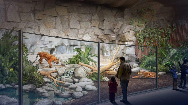 Visualisierund der Tigeranlage im Tierpark. Ein Tigel läuft hinter einer Glasscheibe einen Felsen hinab, ein anderer schläft rechts im Bild. Ein Mann und ein Kind stehen auf der anderen Seite der Scheibe.