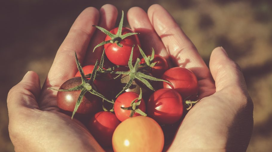 Eine Hand hält rote und gelbe Tomaten