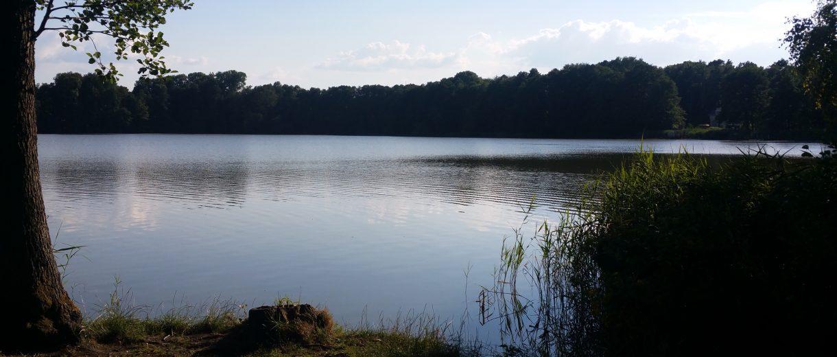Summter See, Ufer mit Wald im Hintergrund