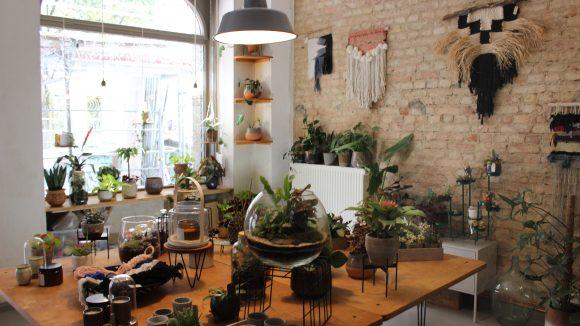 Der Laden Plant Circle von innen mit Holztisch voller Pflanzen.