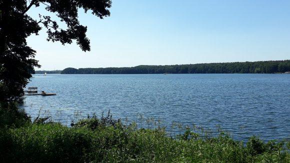 Gras, Schilf und ein Baum im Vordergrund, ruhiges blaues Wasser unter blauem Himmer mit einem von Bäumen gesäumten gegenüberliegenden Ufer: der große Stienitzsee