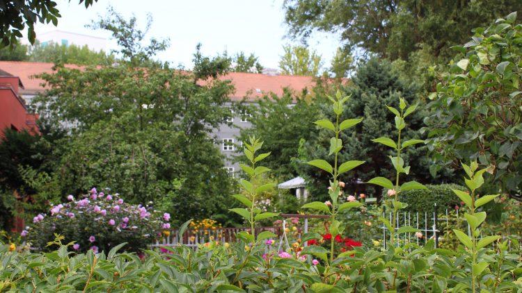 Blick über eine Hecke in einen kleinen Garten mit bunten Blumen. Im Hintergrund Bäume und eine Hauszeile.