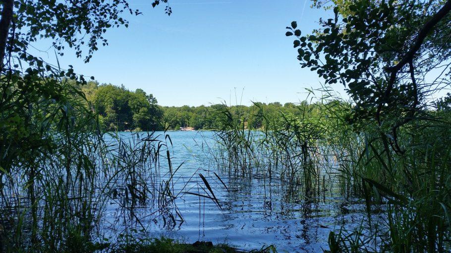 Seeufer mit Blick auf Schilf und Wald am anderen Ufer