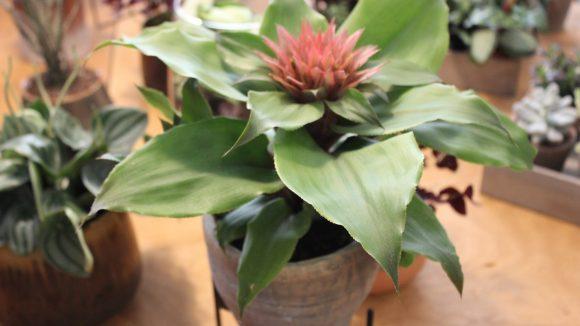 Pflanze mit roter Blüte in Detailaufnahme.