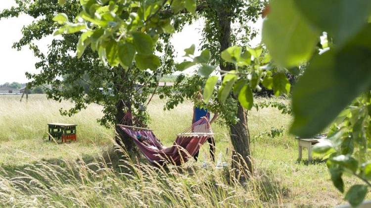 Hängematte zwischen zwei Bäumen auf einer Wiese im Sommer