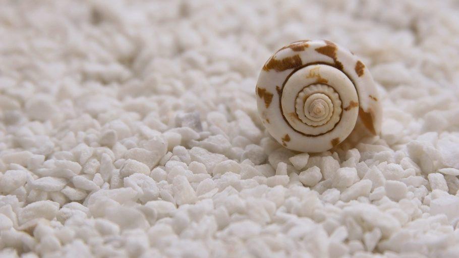 Eine kleine weiße Muschel in Schneckenform mit braunen Flecken liegt in weißen, kleinen Salzkrumen