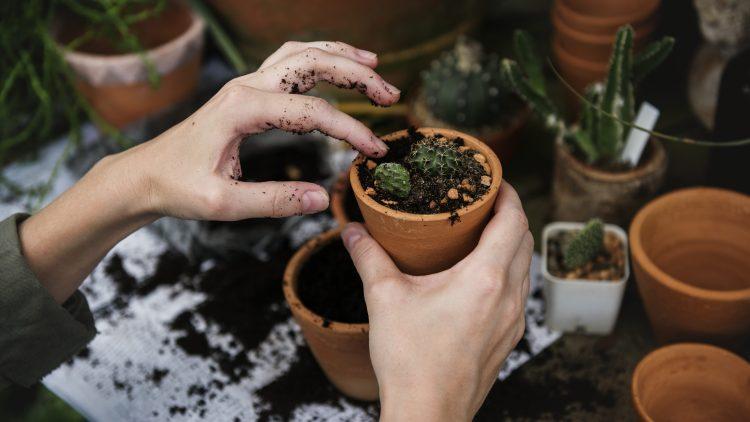 Eine Frau pflanzt ihre Setzlinge um.