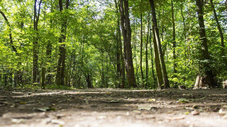 Weg durch einen Laubwald, nah am Boden aufgenommen, von oben etwas Sonne