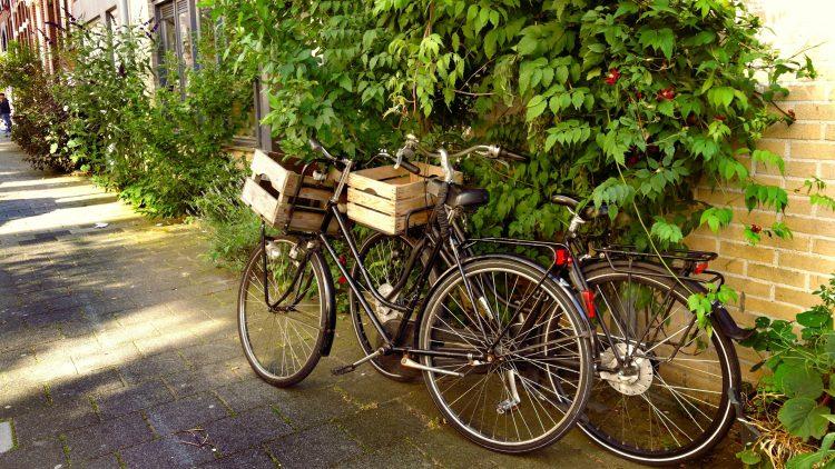 Zwei Fahrräder mit Holzkiste am Lenker lehnen an einer bewachsenen Mauer.