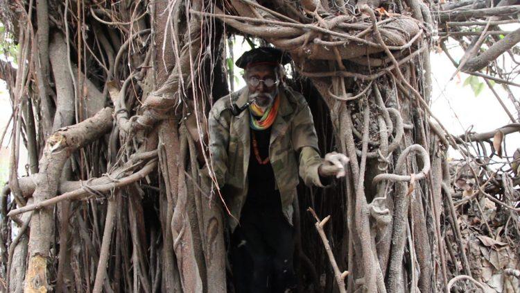 Der Künstler Issa Samb schaut aus seiner Baumhöhle