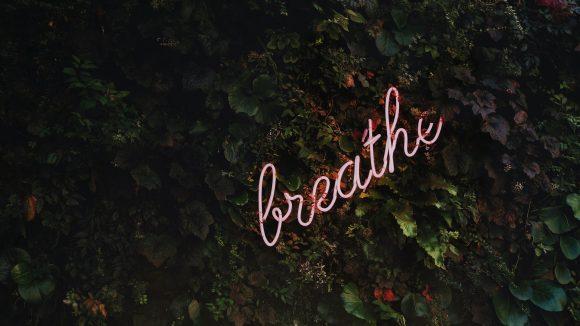 """Grüne Pflanzen-Wand mit """"breathe""""-Neonschild"""