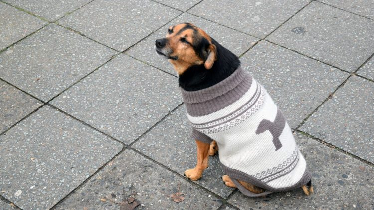 Ein Hund mit einer Art Pulli sitzt auf dem Gehweg