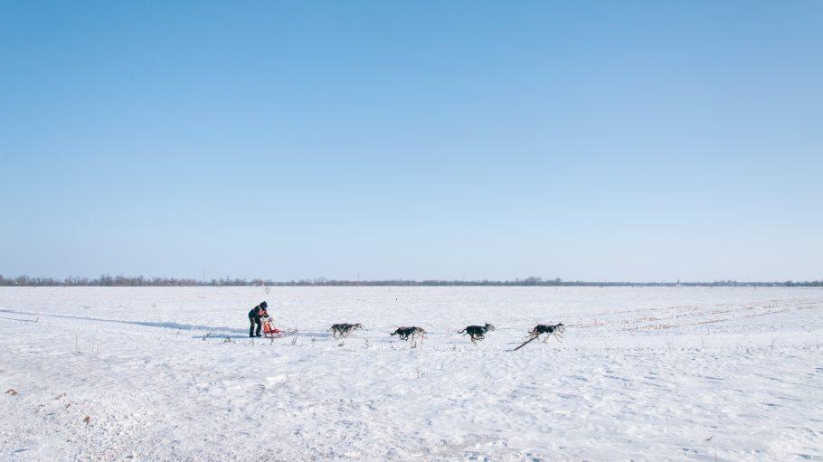 Vier Hunde ziehen Schlitten mit stehendem Mann über verschneites Feld unter blauem Himmel