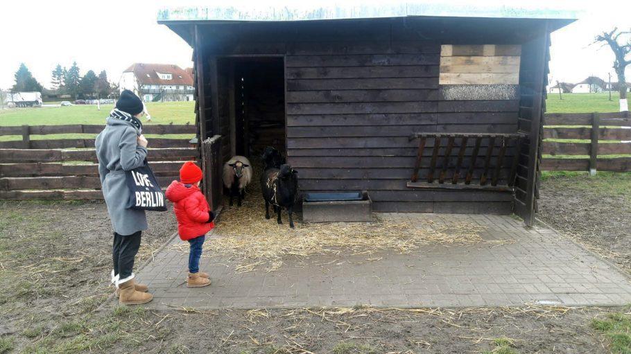 Schafe in einem Holzstall mit Frau und Kind davor
