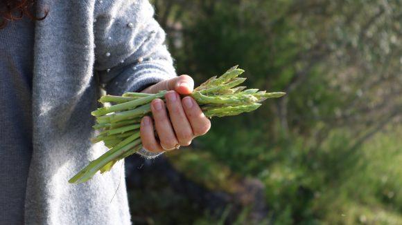 Frau hält grünen Spargel in der Hand, im Hintergrund Natur